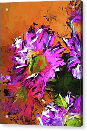 Daisy Rhapsody In Lavender And Pink Acrylic Print