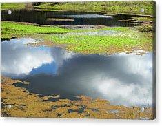 Damselfly Pond - 19 4497 Acrylic Print