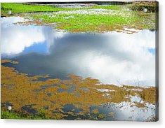 Damselfly Pond - 19 4498 Acrylic Print