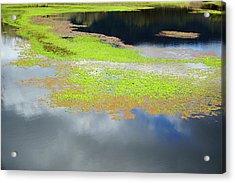 Damselfly Pond - 19 4503 Acrylic Print