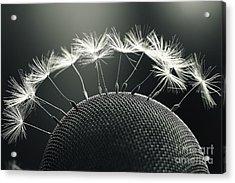 Dandelion Seeds Macro Acrylic Print