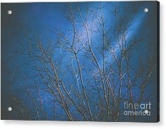 Dark Winter Acrylic Print