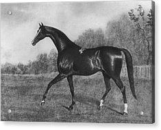 Darley Arabian Acrylic Print by Hulton Archive
