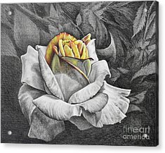 Acrylic Print featuring the drawing Dawn by Nancy Cupp