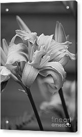 Acrylic Print featuring the photograph Day Lily Yellow Filter by Jeni Gray