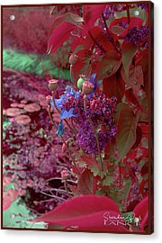 Day Of Red Acrylic Print