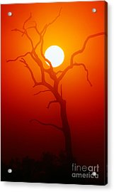 Dead Tree Silhouette With Dusty Sunset Acrylic Print by Johan Swanepoel
