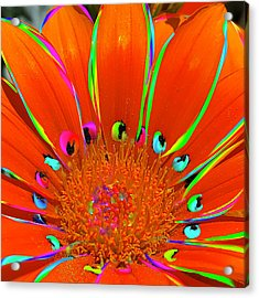 Deep Coral Bloom  Acrylic Print