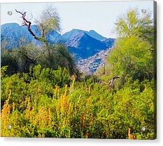 Deep Desert Valley In A Sonoran Desert Spring Acrylic Print