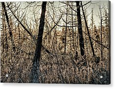 Deep Frost Acrylic Print