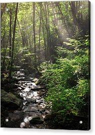 Deep In The Forrest - Sun Rays Acrylic Print