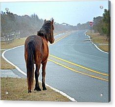 Acrylic Print featuring the photograph Delegate's Pride Awaiting Tourists On Assateague Island by Bill Swartwout Fine Art Photography