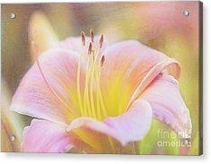 Delicate Pink Daylily Acrylic Print