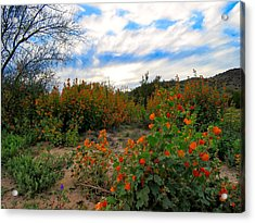 Desert Wildflowers In The Valley Acrylic Print