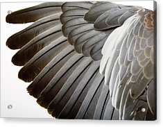 Detail Of A Wing Acrylic Print by Grafissimo