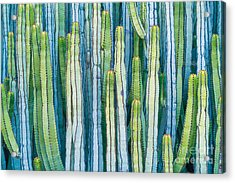 Detail View Of The Cardon Cactus In Acrylic Print
