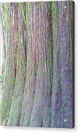 Details, Old Growth Western Redcedar Acrylic Print