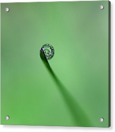 Acrylic Print featuring the photograph Dew Drop On Grass by John Rodrigues