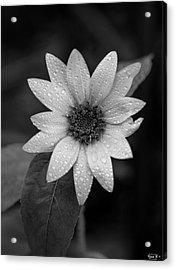 Dewdrops On A Sunflower Acrylic Print