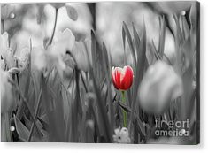 Different Acrylic Print