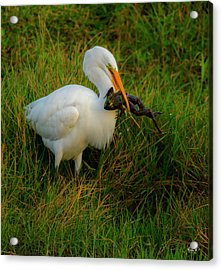 Dinner Is Served Acrylic Print