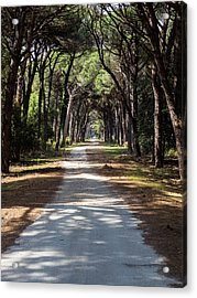 Dirt Pathway In A Mediterranean Pine Forest Acrylic Print