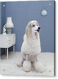 Dog Sitting On Rug, Looking Away Acrylic Print