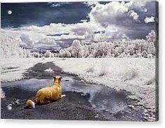Doggy Daydream Acrylic Print