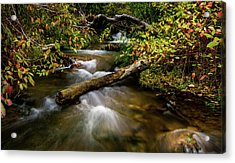 Acrylic Print featuring the photograph Dogwoods Along The Provo Deer Creek by TL Mair