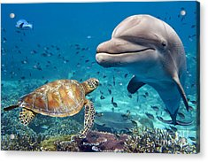 Dolphin And Turtle Underwater On Reef Acrylic Print