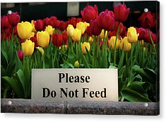 Dont Feed The Tulips Acrylic Print