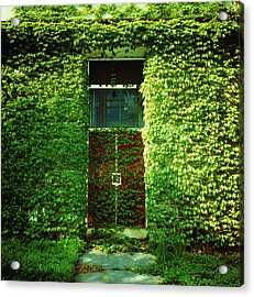 Doors Covered By Ivy Acrylic Print by Silvia Otte