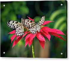 Double Delight Acrylic Print