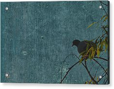 Acrylic Print featuring the photograph Dove In Blue by Attila Meszlenyi