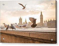 Doves And Seagulls Over The Thames In London Acrylic Print