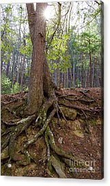 Down In Her Roots Acrylic Print