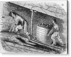 Dragging Coal Acrylic Print by Hulton Archive