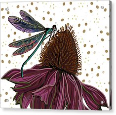 Dragon Fly And Echinacea Flower Acrylic Print