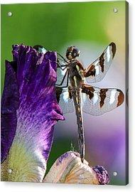 Dragonfly On Iris Acrylic Print