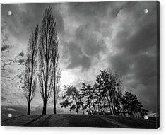 Dramatic Fall Trees Acrylic Print