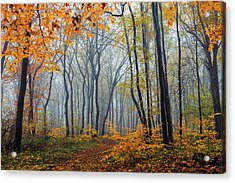 Dream Forest Acrylic Print