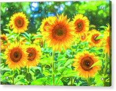 Dreams Of Sunflowers  Acrylic Print