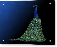 Acrylic Print featuring the photograph Dressed To Party - Male Peacock by Debi Dalio