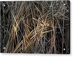 Dried Wild Grass IIi Acrylic Print