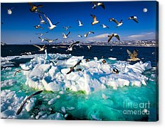 Drift Ice Acrylic Print