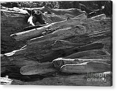 Drifted Wood Acrylic Print