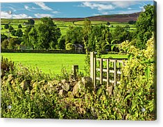 Drystone Wall, Reeth, Yorkshire Dales Acrylic Print by David Ross