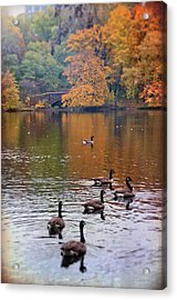 Acrylic Print featuring the photograph Ducks In The Muddy River - Olmsted Park  by Joann Vitali