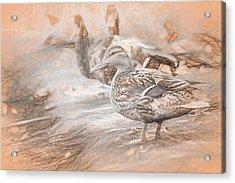 Ducks On Shore Da Vinci Acrylic Print