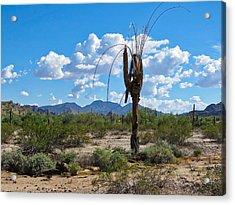 Dying Saguaro In The Desert Acrylic Print
